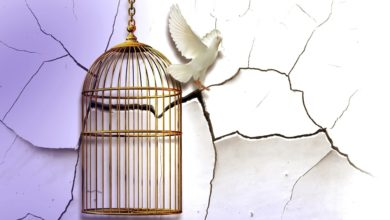 A white dove that is escaping from a cage that symbolizes how to be born again