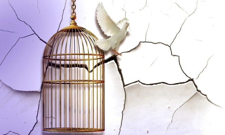 Neu geboren werden - Eine Taube die aus einem Käfig ausbricht und neues Leben erlangt