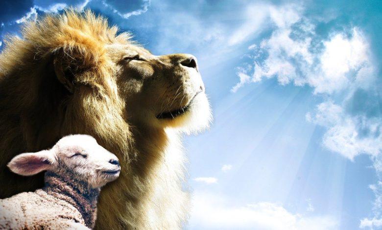 Ein Löwe und ein Lamm, die laut den messianischen Prophezeiungen aus der Bibel auf den Messias Yeshua hinweisen